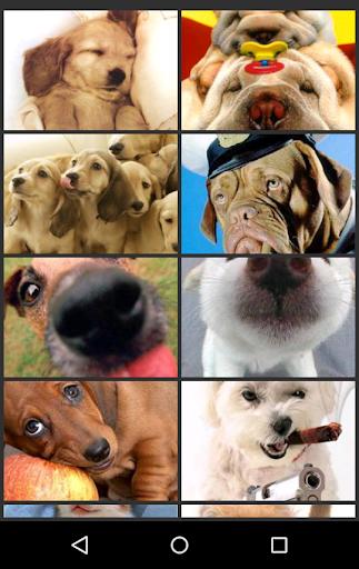 奇妙的動物圖片