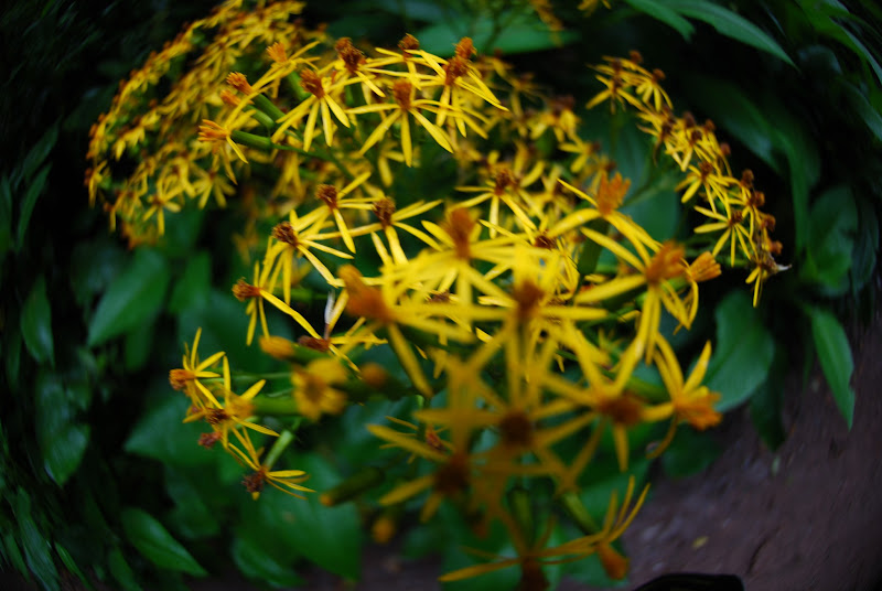 Photo: Beautiful Yellow Flowers at Monteverde Cloud Forest Reserve