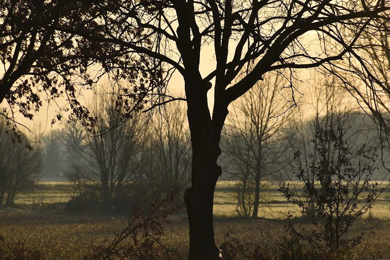 Un alba gialla come il grano di Huntressofsunset