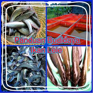 Panduan Budidaya Ikan Lele screenshot