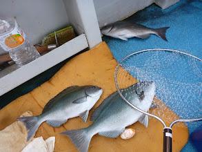 Photo: オナガトリプル??じゃなくて、戸田さんの釣った オナガも入ってます!