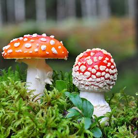 by Eugenija Seinauskiene - Nature Up Close Mushrooms & Fungi (  )