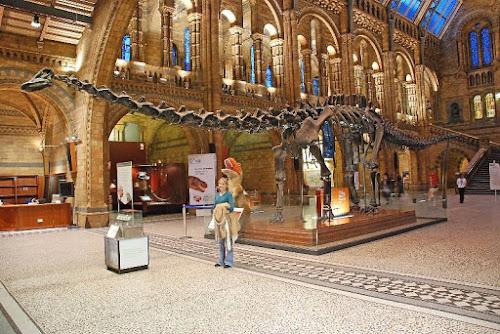 Photo Musée d'Histoire naturelle
