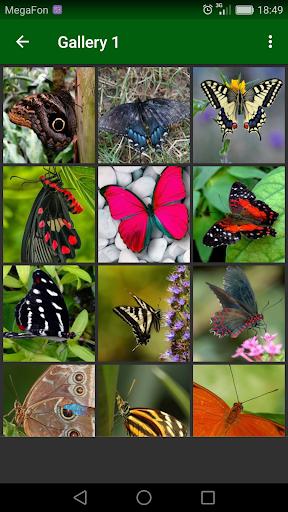 Beautiful Butterflies screenshot 1