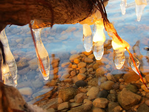 Photo: Golden sunlight on icicles over a lake at Eastwood Park in Dayton, Ohio.