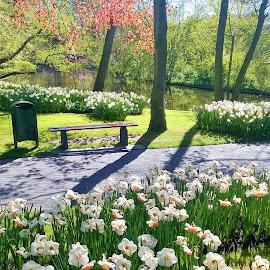 Keukenhof park by Svetlana Saenkova - Instagram & Mobile Other ( spring, spring flowers, springtime, keukenhof, holland, flower garden )