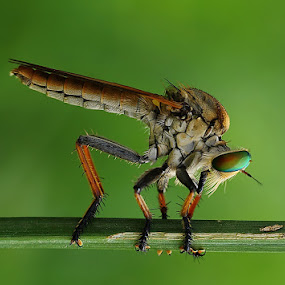 i'm alone by Angga Putra - Animals Insects & Spiders