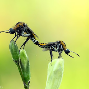 Married Bangkok by Nizar Zulhilmi - Animals Insects & Spiders