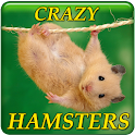 Crazy Hamsters icon