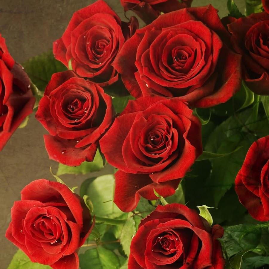 Rosa Vermelha Papel De Parede