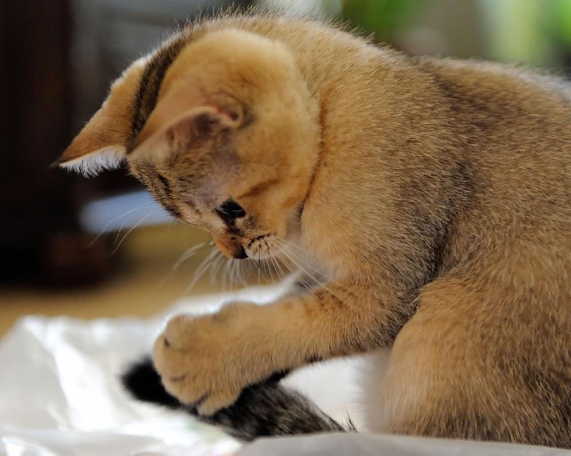 Kucing Dan Cat Wallpaper Apl Android Di Google Play