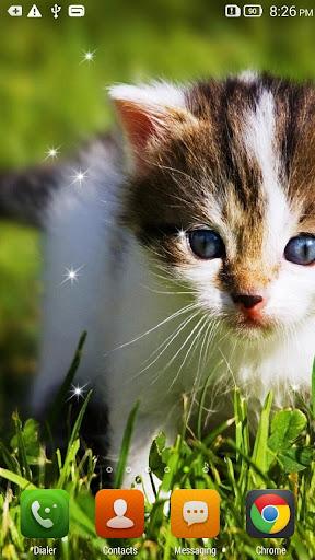 Cute Cats Wallpapers 3d Apk Download Apkpure Co