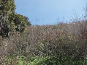 Photo: A veritable forest of poison oak
