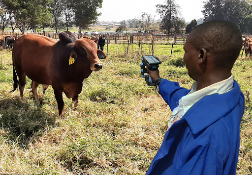 E-Livestock Global Launch Mastercard Blockchain-Based Solution to Bring Visibility to the Cattle Industry in Zimbabwe