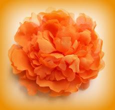 Photo: Пион ко дню рождения королевы Нидерландов 30 апреля - Koninginnedag