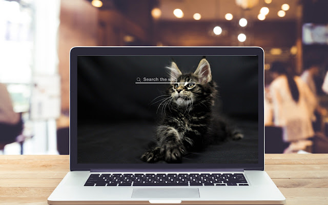 Maine Coon Cats and Kittens Wallpaper Theme