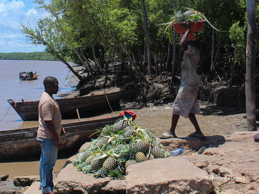 Livelihoods in the Rufiji delta