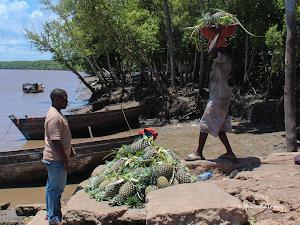 Livelihoods in the Rufiji delta