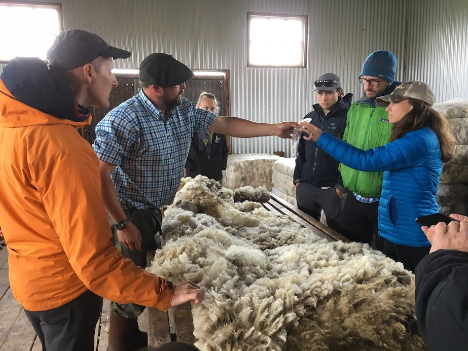 Checking out the quality of the freshly-sheared wool.