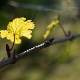 by Dušan Gajšek - Nature Up Close Leaves & Grasses
