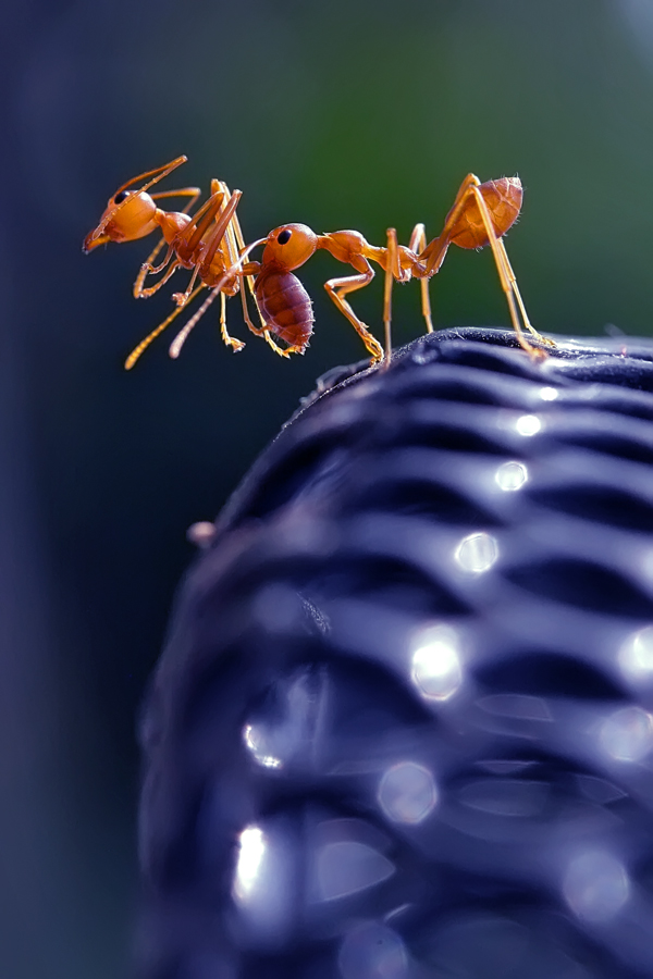 Rescue by Teguh Santosa - Animals Insects & Spiders