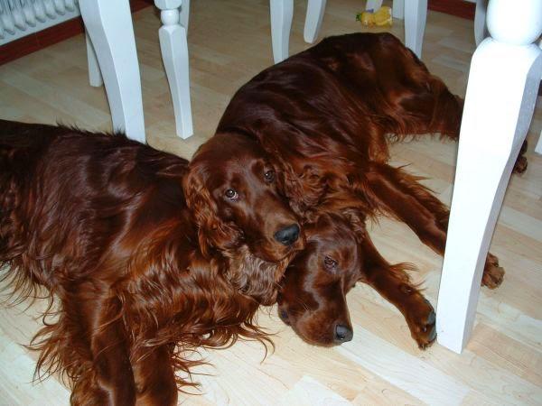 Photo: Med bästa kompisen Lotus, hösten 2004