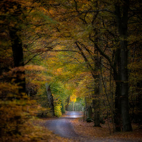 The gravel road by Buffan Walter - Landscapes Forests ( forrest, autumn road, leafs, autumn, colors, autumn colors,  )