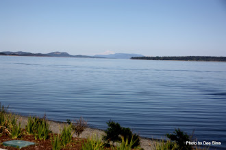 Photo: (Year 2) Day 331 - The Sea at Sidney, With Mount Baker (USA) in Background