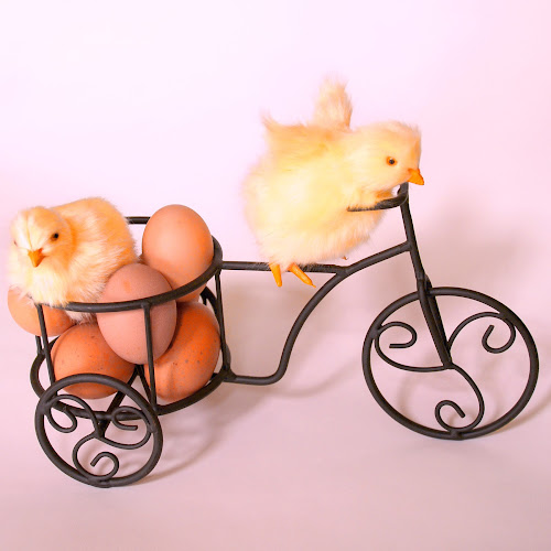 Chicks & Eggs by Jane Spencer - Public Holidays Easter ( eggs, easter, still life, brown, chicks, bicycle )