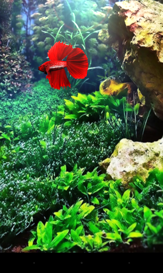 Red betta fish live wallpaper android apps on google play for Betta fish game