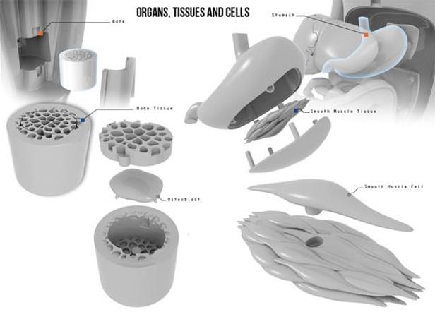 3D-принтер помогает изучить анатомию человека
