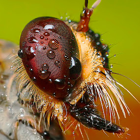 Tukang Vote pilih fotoku by Miswar Rasyid - Animals Insects & Spiders (  )