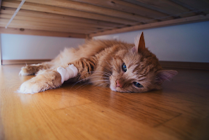 How your cat feels in end stage kidney failure