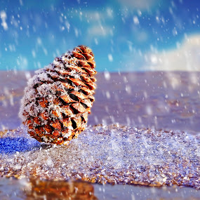 by Silviu Zlot - Nature Up Close Other Natural Objects ( park, nikkor, landscape, cone, frozen, pinecone, winter, d810, nature, blue, ice, snow, outdoor, nikon, garden )