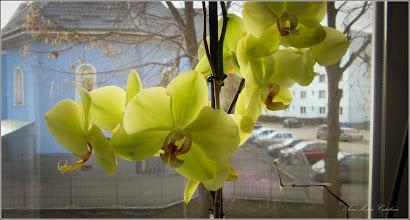 Photo: Orhidee (Orchidaceae) - 2018.03.11