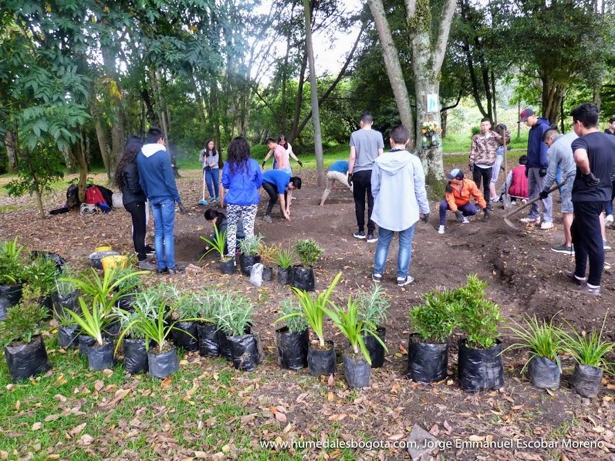 Plantación de jardín funcional