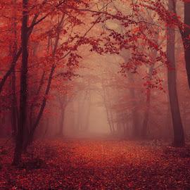 20171021-DSC_2680 by Zsolt Zsigmond - Landscapes Forests ( park, forest, landscape, woods, red, nature, season, color, autumn, fog, foliage, fall, mist )