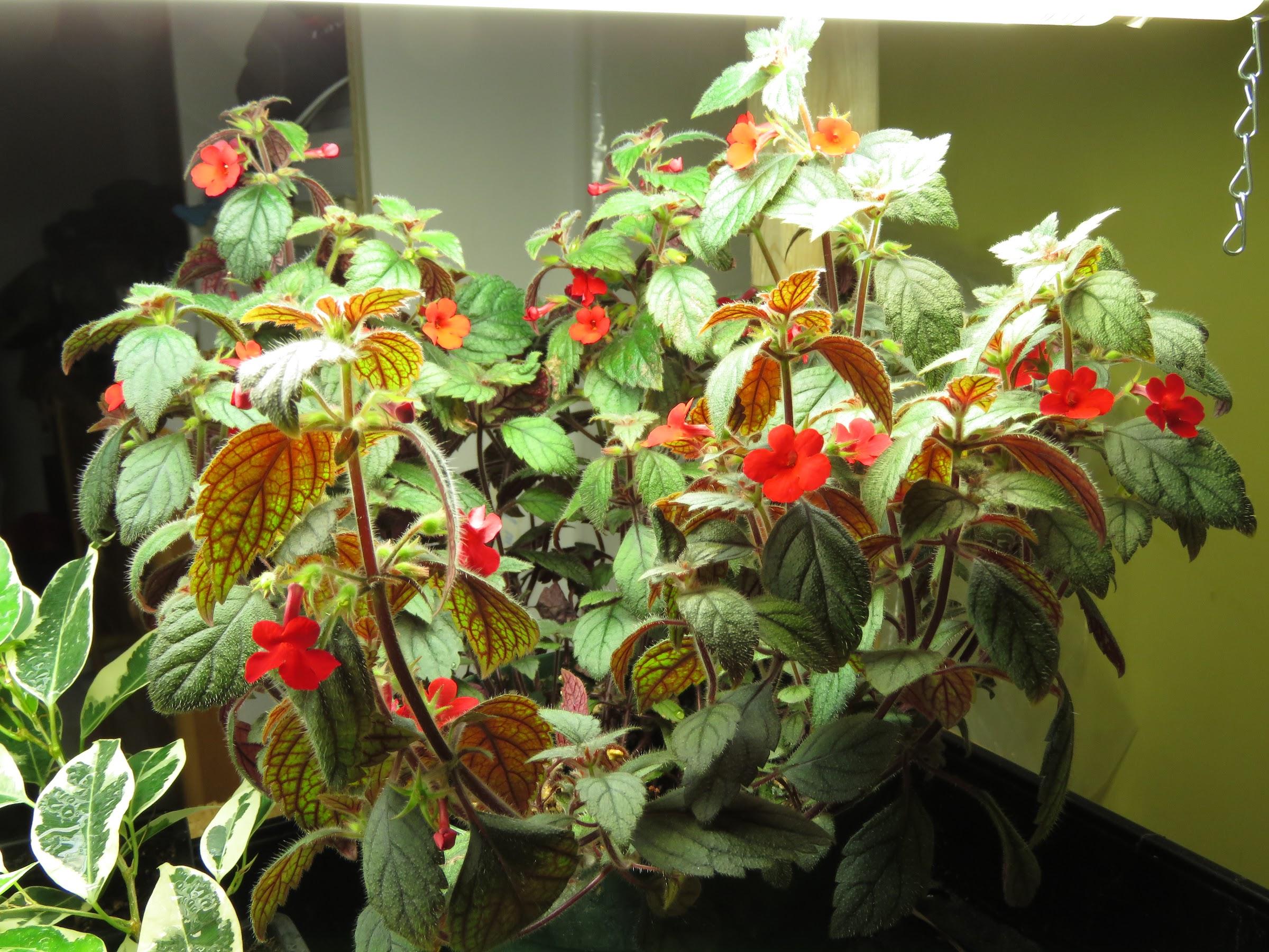 Autres plantes chez Grigri AgAAL8BpR6S8tWavKFEacN_j-LNOgNBiWAF0r0M-gV2xtrlaXYFfU1tzRumtS6u4fJUqqekgGJMvbbqyoIFGa8OL7XMW9KEO55lEDq8pRzGb7GGVMKhzlydD7c_gKhplwBEO5zPf3o4=w2400
