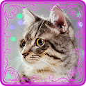 Talking Cat Reality icon