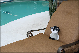 Photo: Carlisle hangs out by my sister's pool.