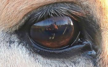 Photo: Vous voyez ce qu'il voit (!)