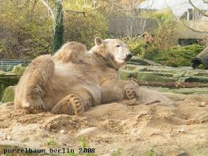 Photo: Sandbaerchen Knut hat die Ruhe weg ;-)