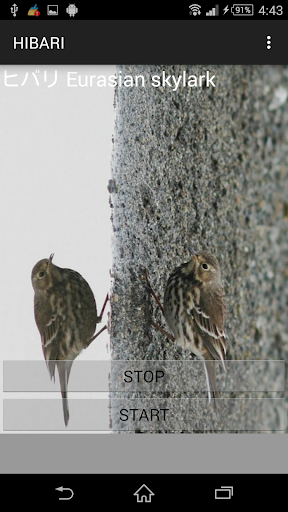 鳥鳴き声ヒバリ