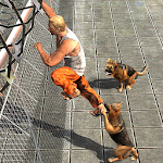 Prisoner Escape - Police Dog Apk