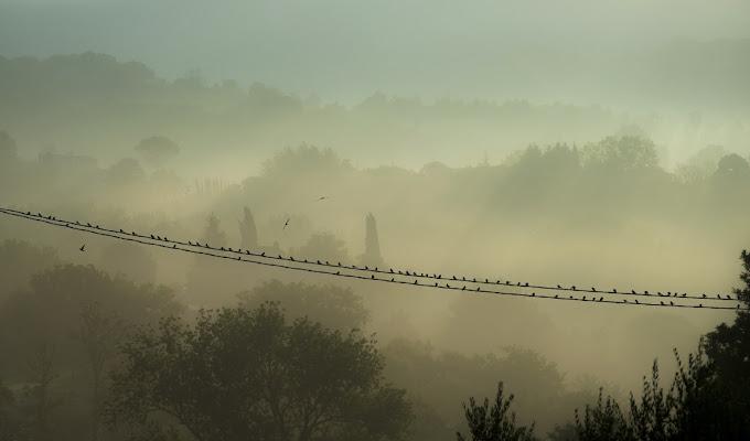 Early morning di Paolo Zanoni