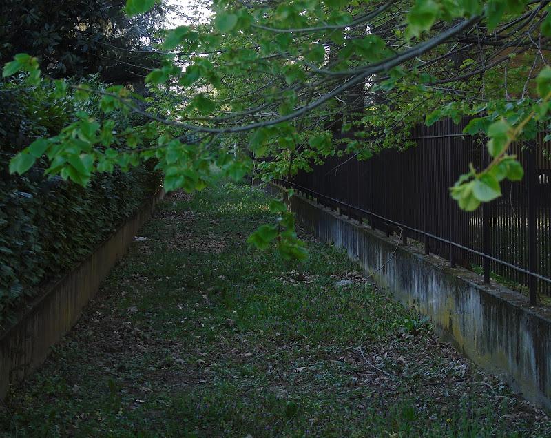Green alley di lia25_