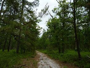 Photo: Pine Barrens habitat at Brendan Byrne State Forest