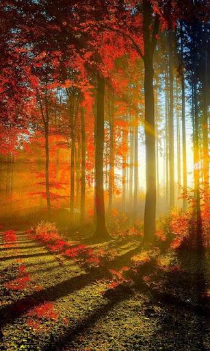 LWP가을 숲