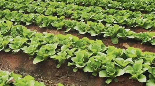 El sector agroalimentario será uno de los motores de activación tras la crisis