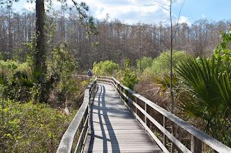 Photo: Boardwalk at Corkscrew Swamp Sanctuary